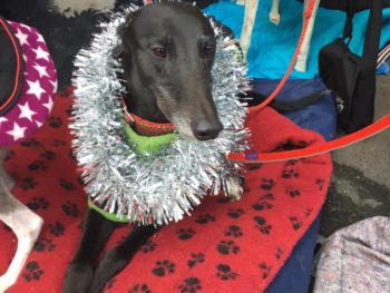 Dog with Christmas tinsel