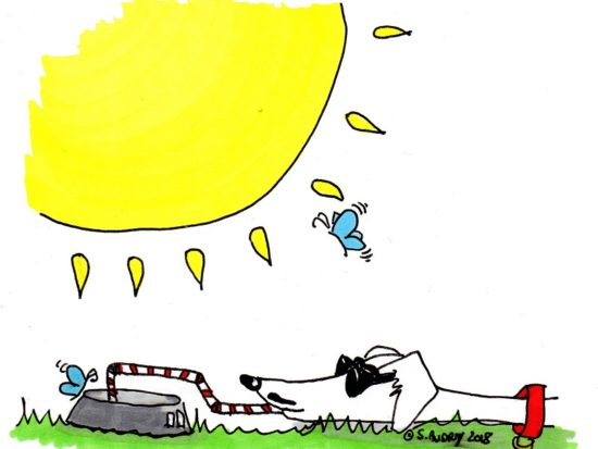 Dylan sunbathing