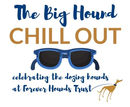 Big Hound Chill Out