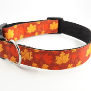 Maple leaf house collar