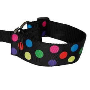 Multicolour circles martingale collar
