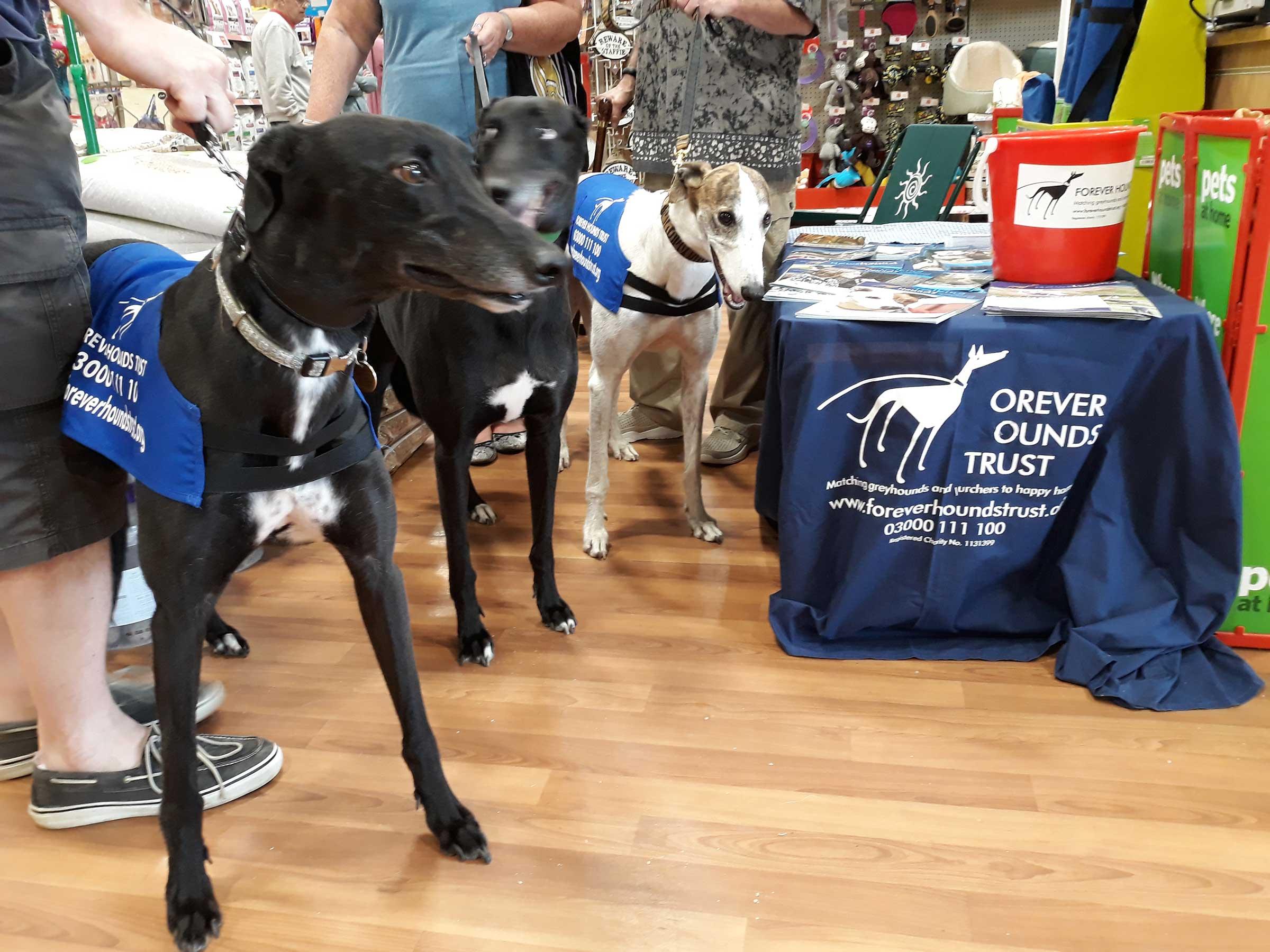 Dogs at adoption awareness event