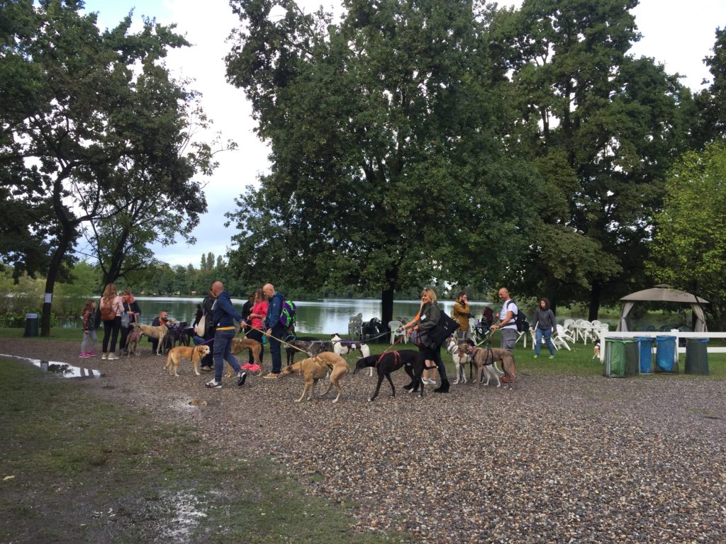 'Happy at Last' event in Milan with lots of greyhounds attending.