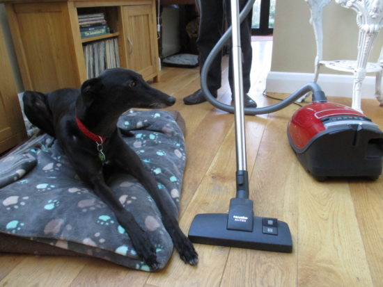 Dog in living room with vacuum cleaner