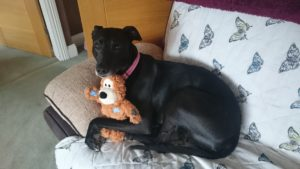 Rosie the dog with her teddy